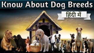 MOST FAMOUS DOG BREEDS IN THE WORLD [Complete Information About Dogs] #populardogbreeds #dogbreeds