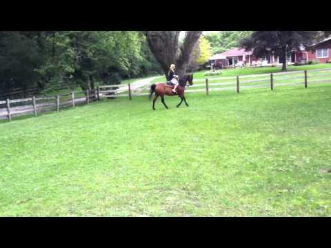 Don riding a horse