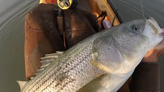 Striper Fishing off Corsons Inlet New Jersey by Kayak December 6 2015