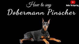 How to pronounce Dobermann Pinscher | Dog Breed Names