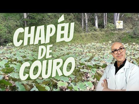 As Ervas e seus Benefícios - CHAPÉU DE COURO  11978bc33c9