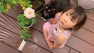 太陽の下、娘からイタズラされる猫 ラガマフィン Cats playing and mischievous with my daughter in the sun