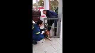 Συγκινητική διάσωση σκύλου από την Πυροσβεστική (ΒΙΝΤΕΟ)