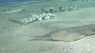 Aqua world Ooarai, Ibaraki Japan  Sharks of the world 2 アクアワールド大洗 サメの海2