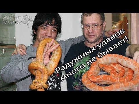 Коллекция радужных удавов Jaroslav Gilar