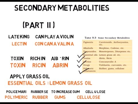 Secondary metabolites from ncert (part II) - YouTube