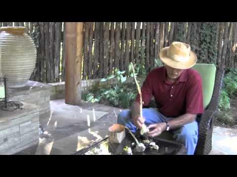 Garlic Basics - Dirt Doctor, Howard Garrett