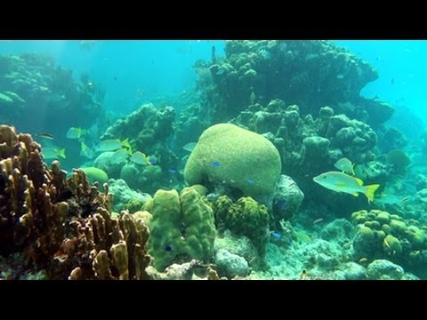 Adventure Travel ~ Banco Chinchorro Mexico   YouTube HD