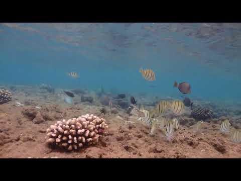 Snorkeling Ke'e Beach, Haena Beach Park, Kauai