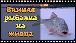 Зимняя рыбалка на живца закончилась поимкой язя а не налима.