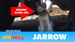 A broken jar over this cat's head almost killed him!