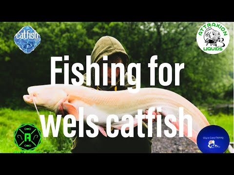 FISHING FOR WELS CATFISH
