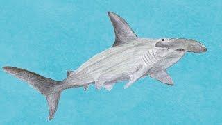 Der Hammerhai - The Hammerhead Shark - Klavierstücke von Anne J. Rochlitz
