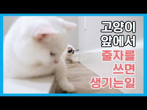 고양이 앞에서 줄자를 쓰면 생기는 일 feat. 냥통수