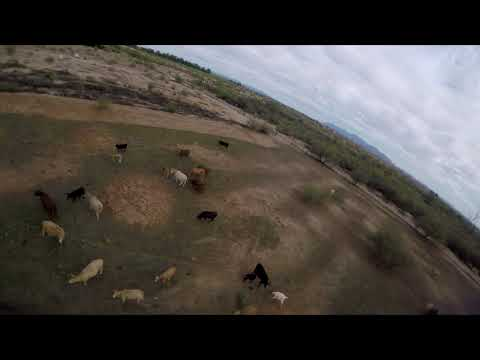 Fun day out with the Cows