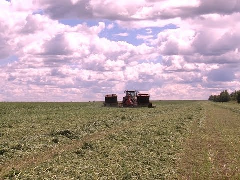 Аграрии Марий Эл приступили к заготовке кормов на зиму