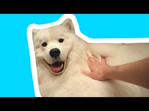 All Star but it's played on a thicc doggo