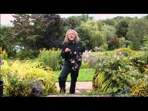 Robert Plant's ALS Ice Bucket Challenge