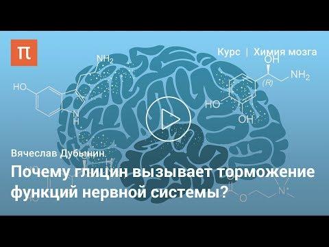 Глицин и аденозин —Вячеслав Дубынин