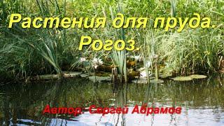 видео Какими растениями озеленить пруд? Популярные растения пруда