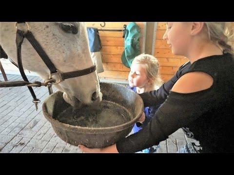 Feeding The Horses!! Day 666 (10/07/16)