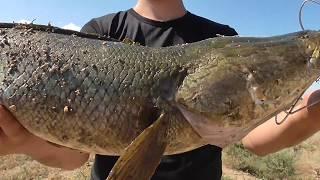 Рыбалка на Капчагае Летний турнир по ловле змееголова Сообщество Охотники КЗ