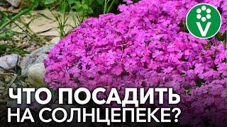 СОЛНЕЧНАЯ КЛУМБА. Какие цветы способны выдержать жару и засуху?