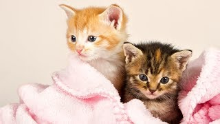 Animals Doing Things 😍 Funny Cat and Dog Videos Compilation 2018 #4