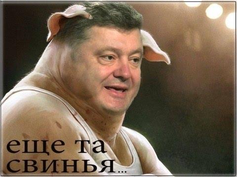 Картинки по запросу Порошенко свинья