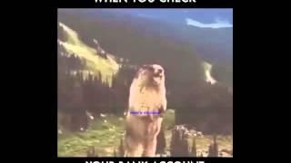 beruang teriak
