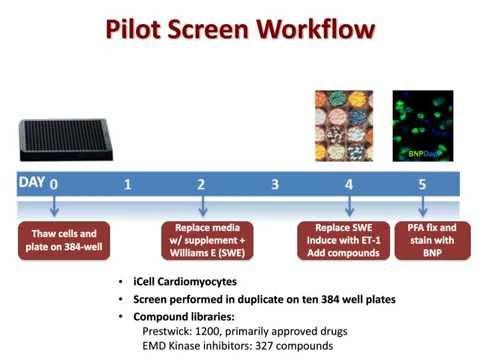 Webinar: Using Human Cardiomyocytes in Phenotypic Screens and Target Verification