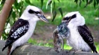 Про любовь и дружбу у животных, птиц и насекомых.