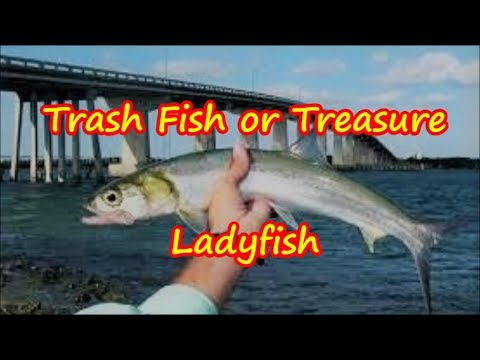 Can You Eat Ladyfish Trash Fish Or Treasure