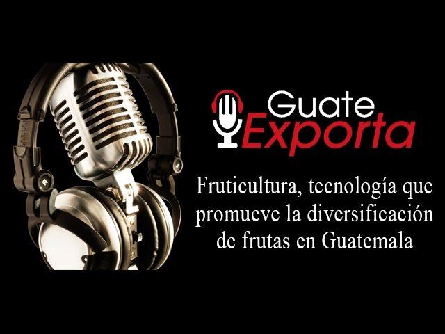 Fruticultura, tecnología que promueve la diversificación de frutas en Guatemala