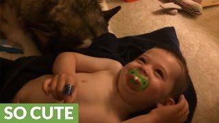 Dog helps toddler