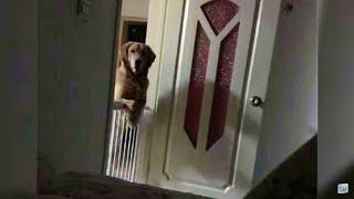 Эта Собака Каждую Ночь Смотрела На Хозяина, А Потом Он Узнал Шокирующую Правду