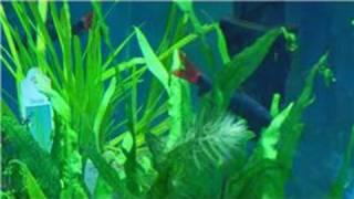 Fish Tanks & Aquarium Maintenance : How To Clean Artificial Aquarium Plants