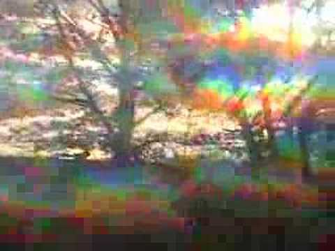 Diffracted Forest