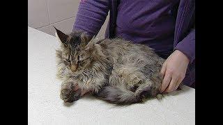 В Динском районе волонтеры спасли восемь кошек и двух собак