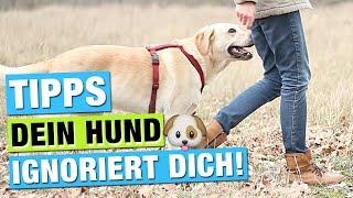 Hund hört nicht, ignoriert mich | Hundeerziehung | Hunde erziehen | Hundetraining