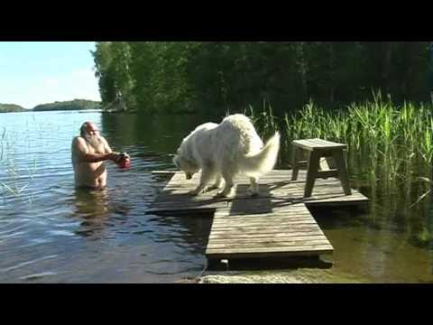 Great Pyrenees bath