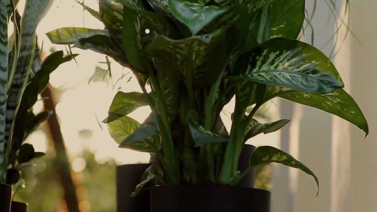 plants of steel youtube