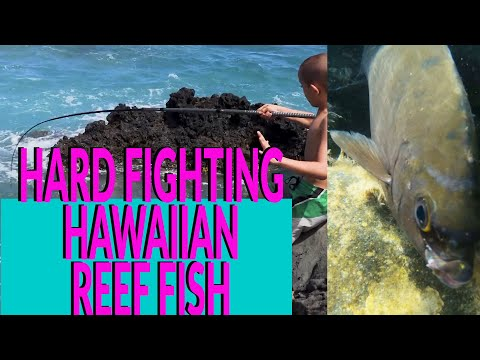 TIPS And How To CATCH ONE Of HAWAII'S HARDEST FIGHTING REEF Fish - The Nenue- ON ROUGH SHORELINES