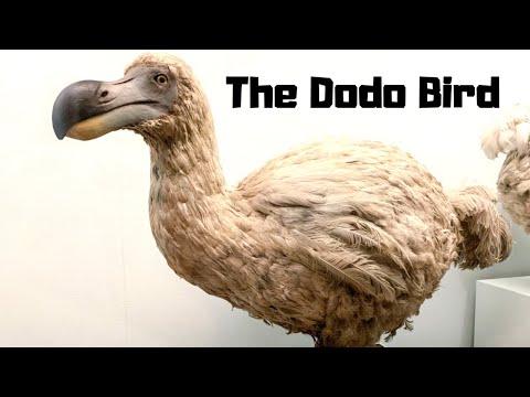 10 Beautiful Extinct Birds