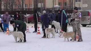 """Региональная выставка собак """"Новогодний калейдоскоп"""". Липецк"""