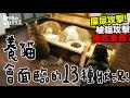黃阿瑪的後宮生活-養貓會面臨的13種狀況