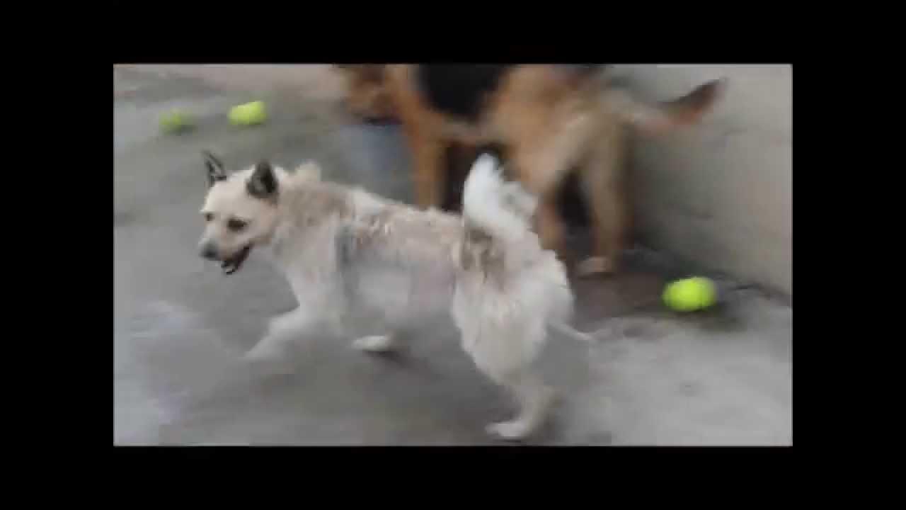 Picola protectora de animales y plantas de m laga youtube for Protectora de animales malaga ciudad jardin