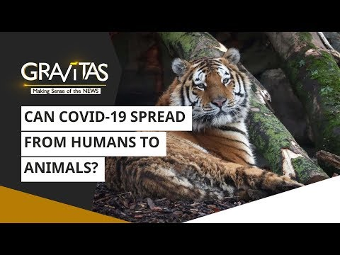 Gravitas: Are Animals Contracting Coronavirus From Humans? | COVID-19 Alert