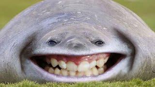 30 Curiosidades que te harán sonreír