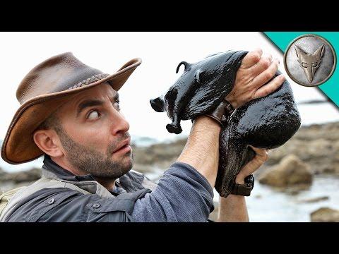 Brave Wilderness | IT'S HUGE! Giant Black Slug!